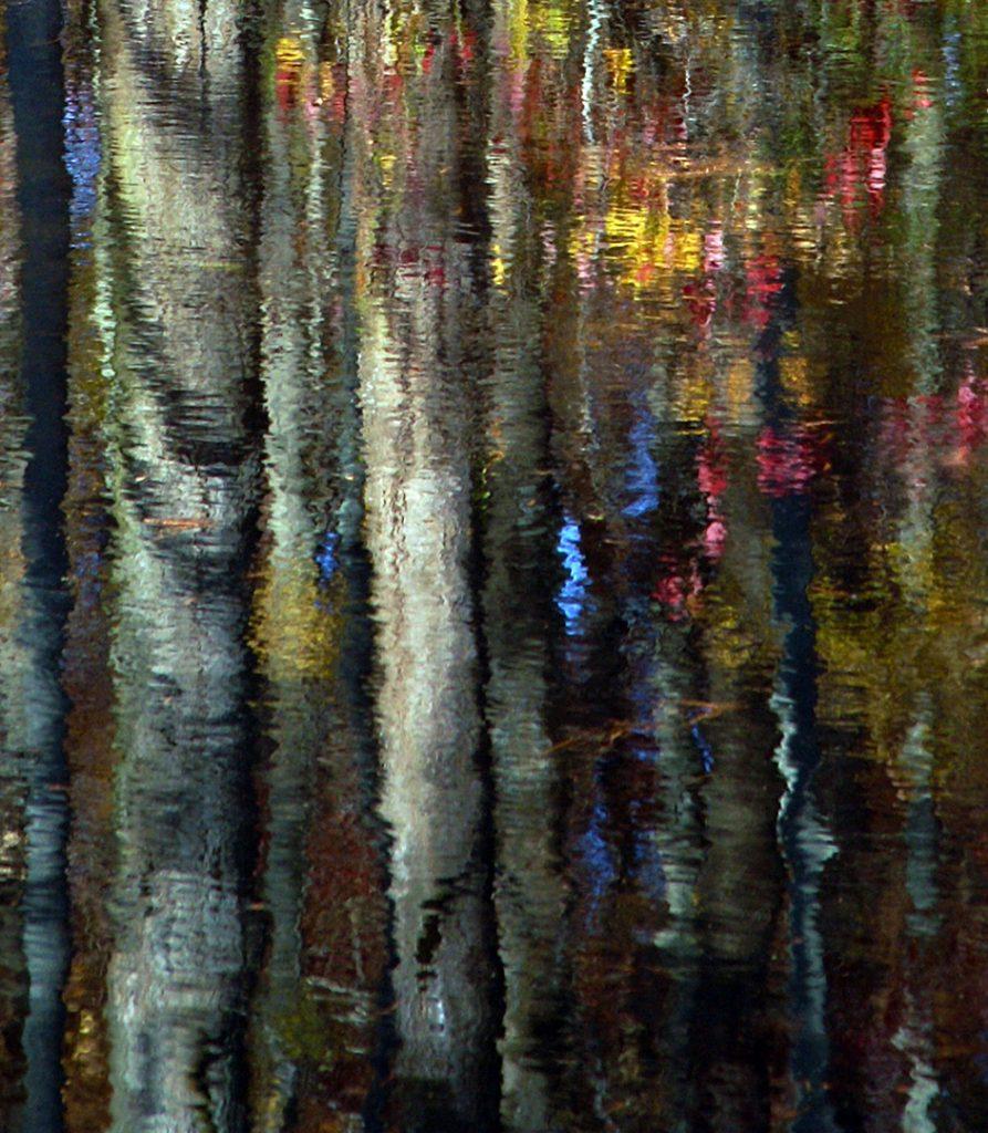 Cypress Swamp (Queen Ann's Creek)