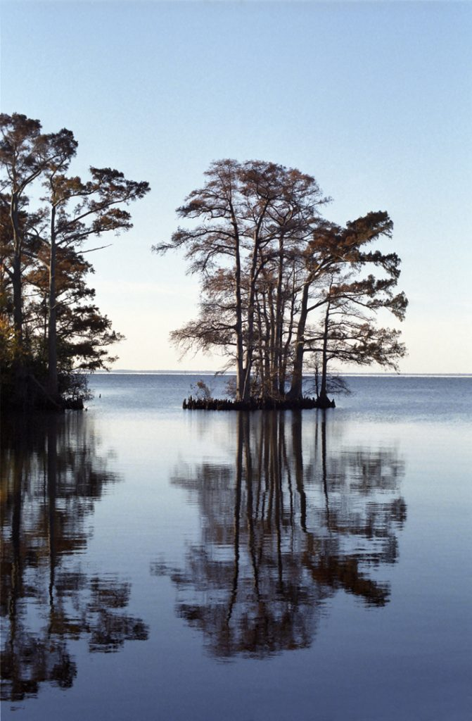 Photograph of cypress trees in Edenton bay