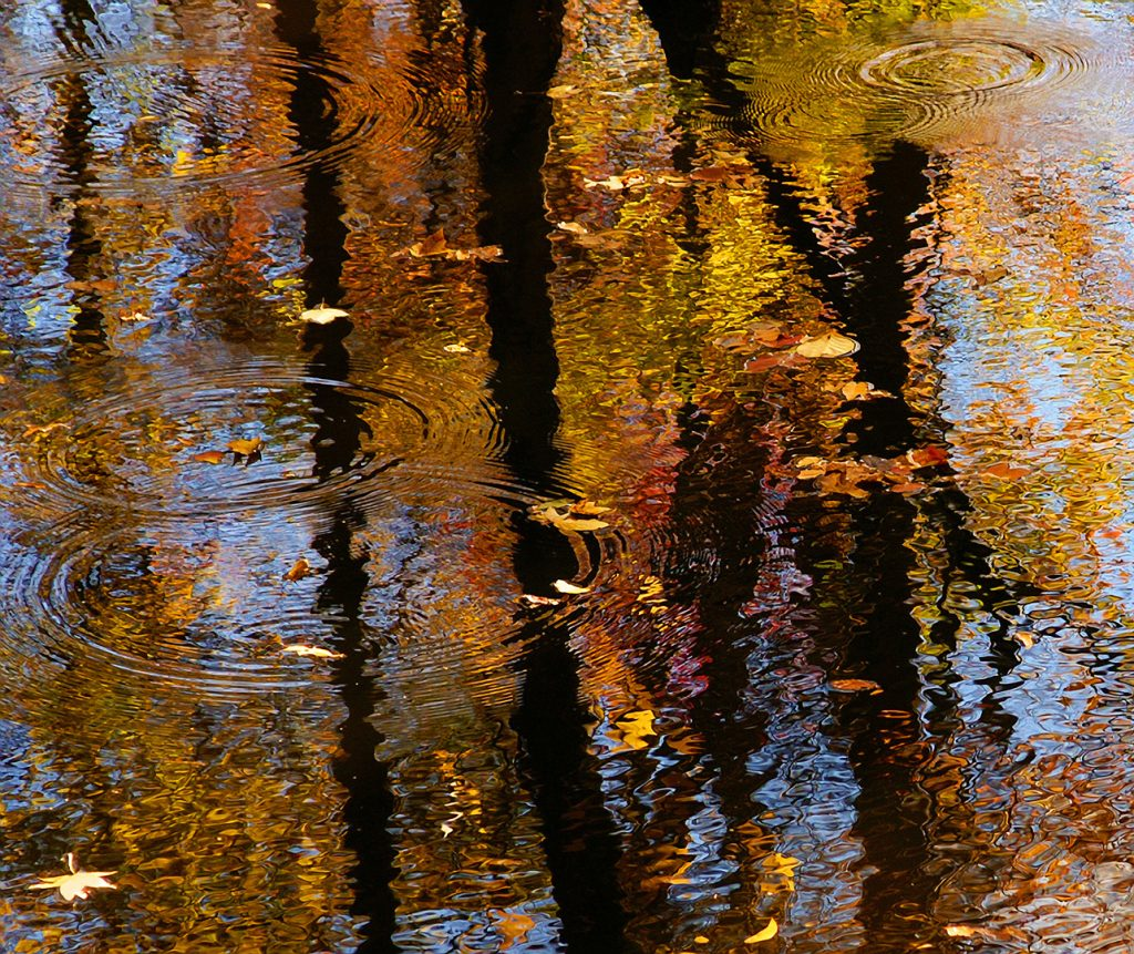 Photograph of autumn  leaves in a stream with a reflection of the trees
